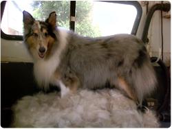 dog deshedding treatment